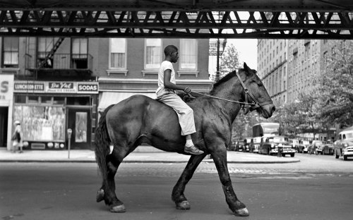Man-on-horse-vivian-maier-photo-picture-for-desktop-1